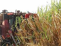 Fitomas-M: Firm Friend of Sugar Cane Growers