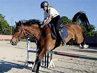 An auction of showjumping horses has illustrated the diversity and development of equine commercial and tourism options available to visitors to Cuba.