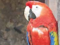HAVANA.- A new investigation has revealed that the Havana Bay was populated by flamingos, Cuban trogons, parrots, macaws and other birds that arenot currently seen in the capital of Cuba.