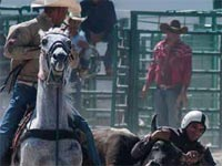 The International Agriculture and Livestock Fair, FIAGROP 2016, scheduled for March 12-20 at Havana's Rancho Boyeros fairgrounds, is set to offer more rodeo competitions and cattle shows and has a particularly busy commercial and business agenda.