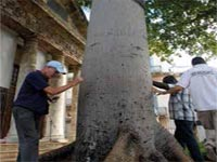 Every November 15, hours before Havana celebrates a new anniversary of its founding, Cubans began to gather around the El Templete monument -a building that occupies the place where the city was officially founded- to make wishes as they walk three times around the ceiba tree.